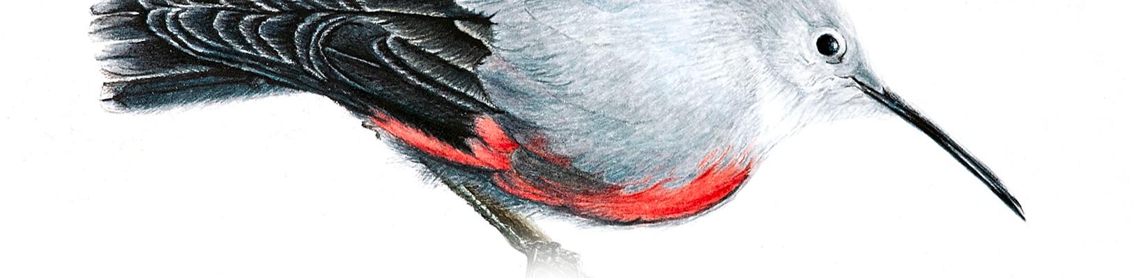 header-2michela-moretto-pittrice-botanica