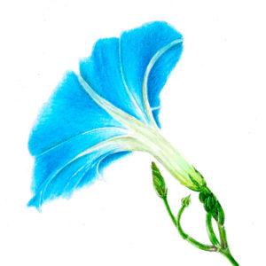 icona-pittrice-botanica-1
