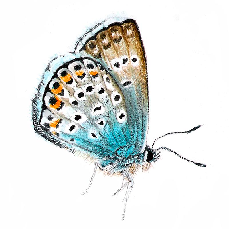 icona-pittrice-botanica-2