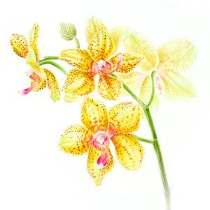 icona-pittrice-botanica-4