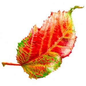 icona-pittrice-botanica-5
