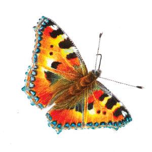 icona-pittrice-botanica-6