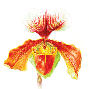 icona-pittrice-botanica-7