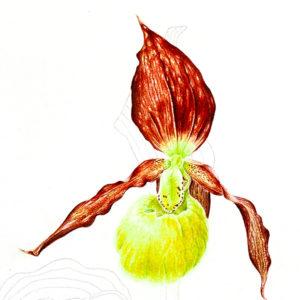 icona-pittrice-botanica-9